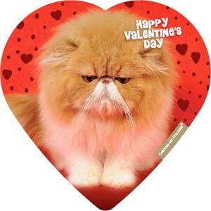 Cuddly Kitten Heart Box of Chocolates 4pc
