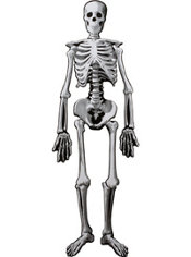 Jointed Skeleton Cutout 53in