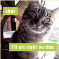 Git Right On That Lolcats Magnet