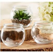 Glass Terrarium Bowls