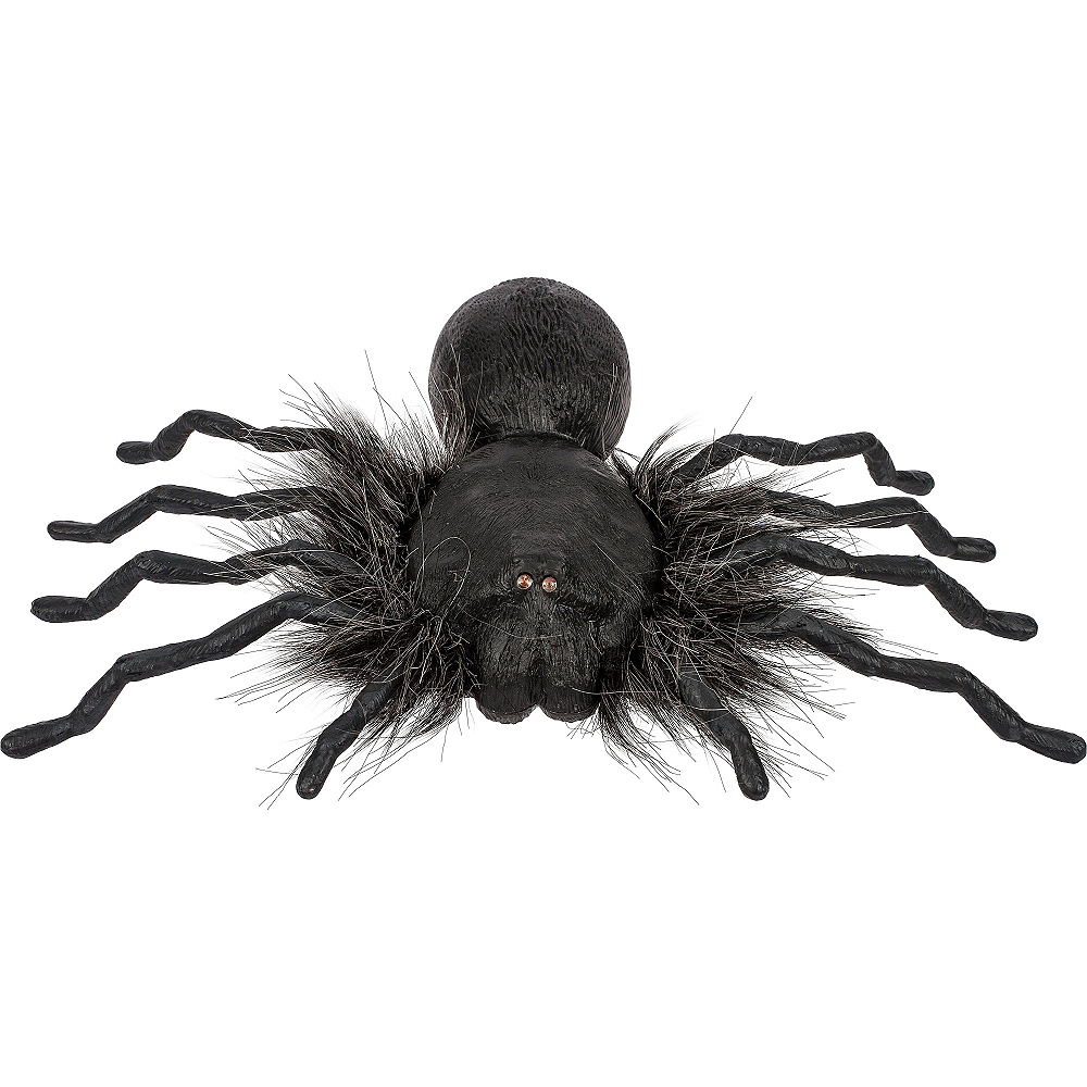 Creepy Dropping Spider Image #3