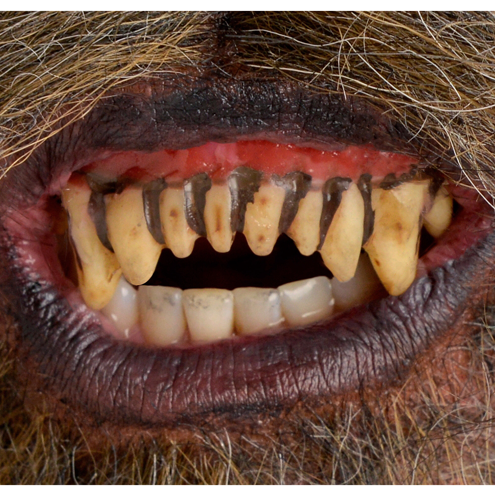 Nav Item for Fitted Werewolf Teeth Image #1