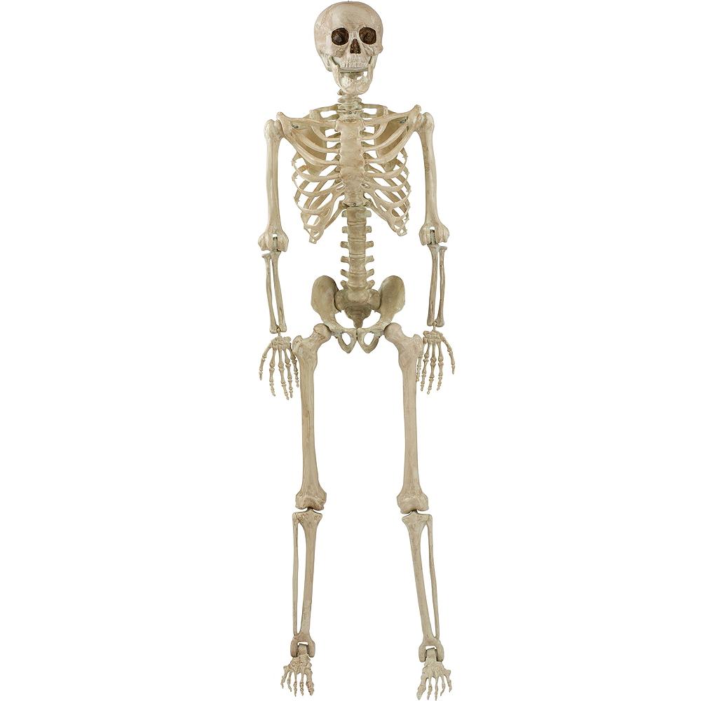 Life-Size Poseable Skeleton, 5ft Image #1