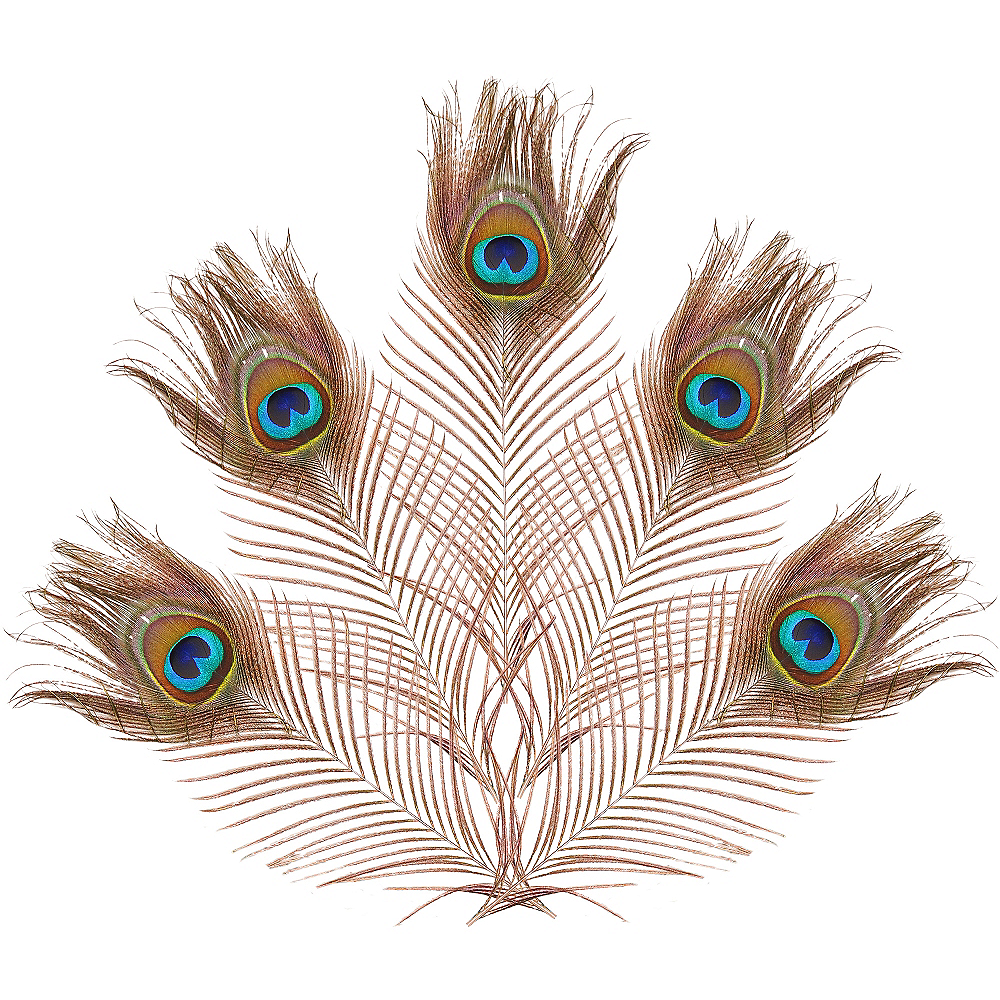 Bag of Peacock Feathers 5ct Image #1