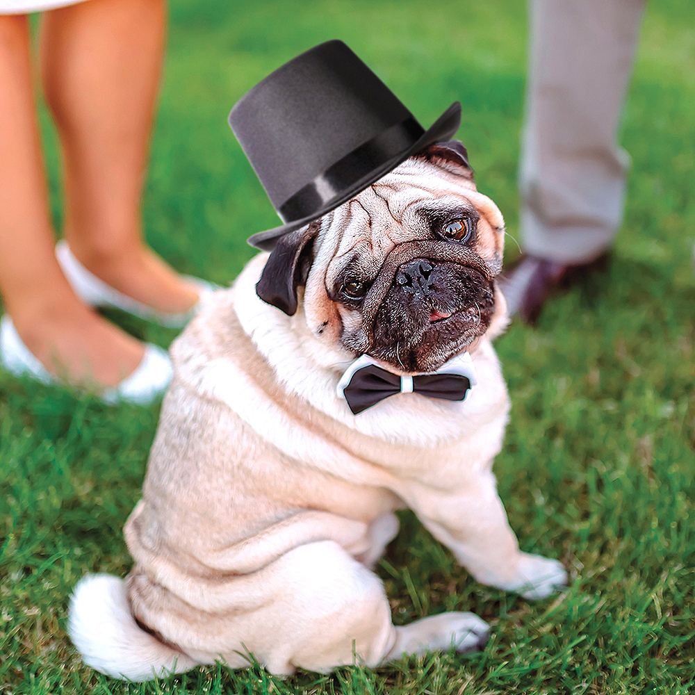 Dog Top Hat Image #1