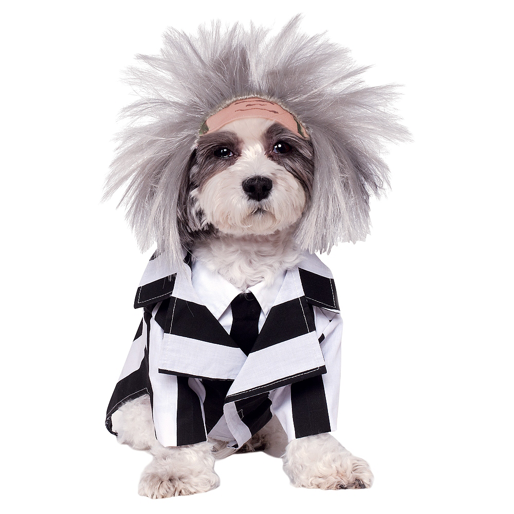 Beetlejuice Dog Costume Image #1