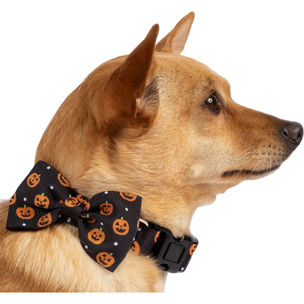 Halloween Pumpkin Bow Tie Dog Collar Image #1
