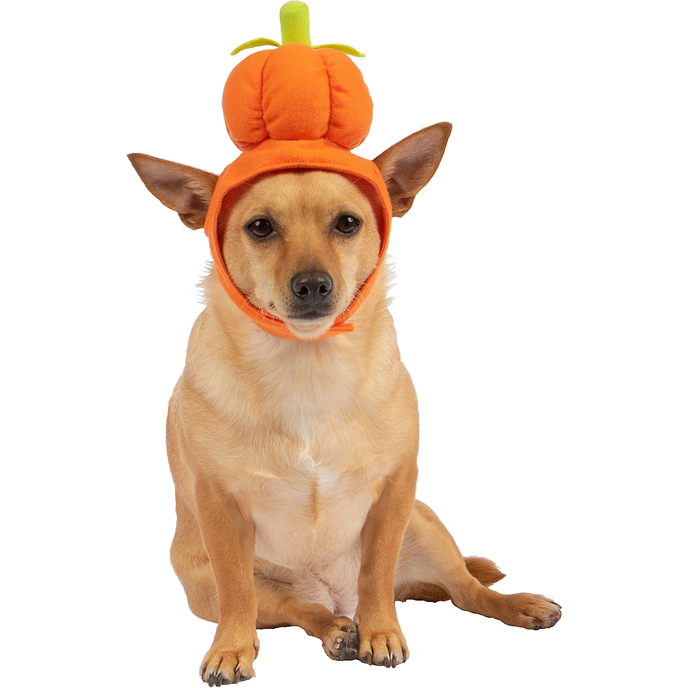 Orange Pumpkin Dog Hat Image #1