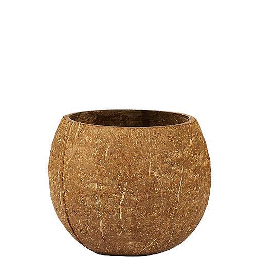 Coconut Cup Image #1
