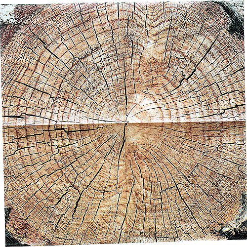 Cut Timber Beverage Napkins 16ct Image #3