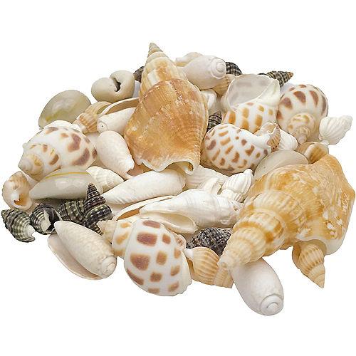 DIY Assorted Decorative Seashells Image #1