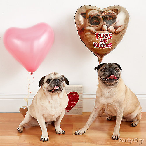 Valentines Day Pet Portrait Idea